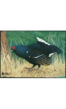 COQ DE BRUYERE(JVD Animal Face Blue-Grouse ) - Ulysses archery - equipment - accessorie -