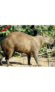 CAPYBARA 2 - Ulysses archery - equipment - accessorie -