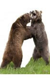 Target of 2 Bears fight 2D Archer Targets - Ulysses archery - equipment - accessorie -