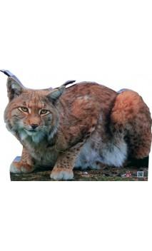 Cible de Lynx 2D Archer Targets