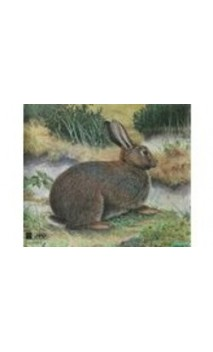 LAPIN (JVD Animal Face Rabbit)  - ULYSSE ARCHERIE