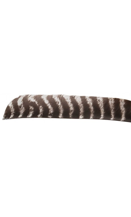 Secondary Wild Wild Turkey Feathers All natural strikethrough. - Ulysses archery - equipment - accessorie -