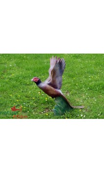 Target 3D Pheasant in flight NATUR FOAM - Ulysses archery - equipment - accessorie -