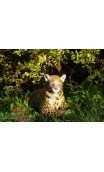 Cible 3D Le Leopard au repos NATUR FOAM - ULYSSE ARCHERIE