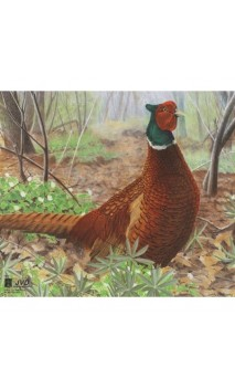 Target Paper Pheasant Reinforced JVD Distribution(JVD Animal Face Pheasant) - Ulysses archery - equipment - accessorie -