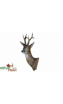 Brocard Tête Dressée Natur-Foam - Ulysses archery - equipment - accessorie -
